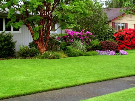 hijaunya rumput tetangga