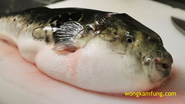 semangkuk sup racun-ikan buntal